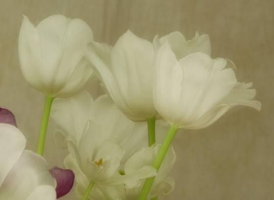 Bouquet  flutter