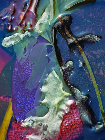 Kelp abstraction