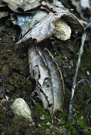 This leaf
