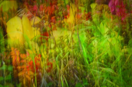 Fall plants