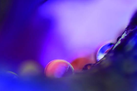 Violet raindrops on iris