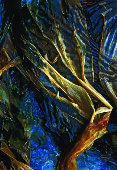 Point lobos seaweed 2