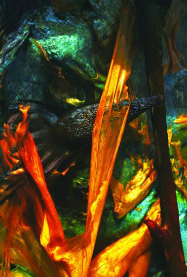 Point lobos seaweed 3