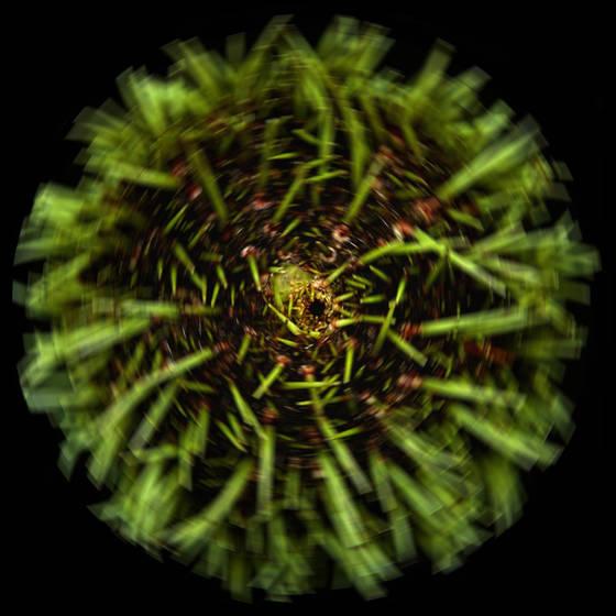 Urchin  4
