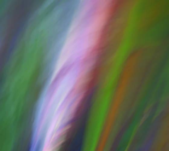 Painted eucalyptus i