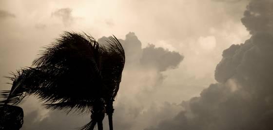 Wind on palm