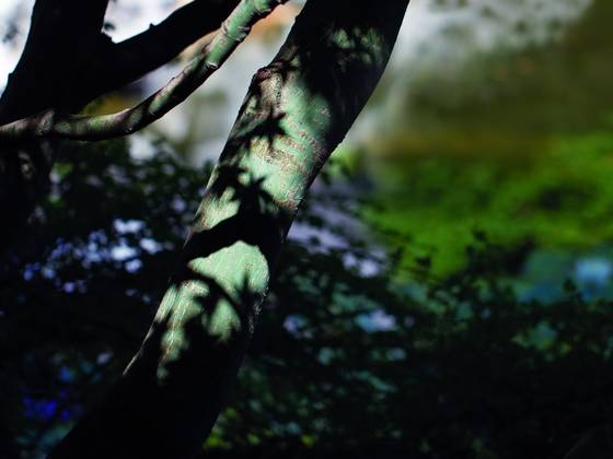 Hatsumi woods