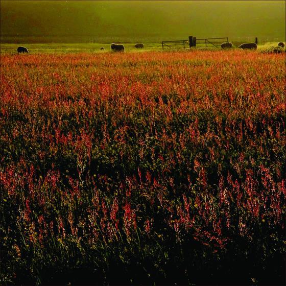 Landscape 1