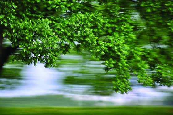 Pecan orchard 1
