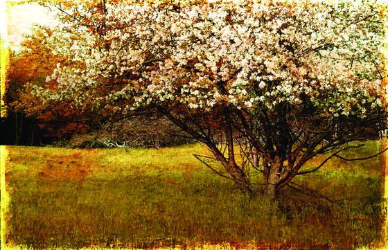 Spring bloom  st  paul