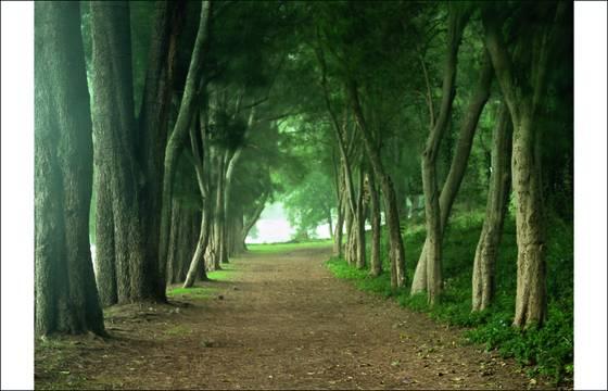 Walkin the woods