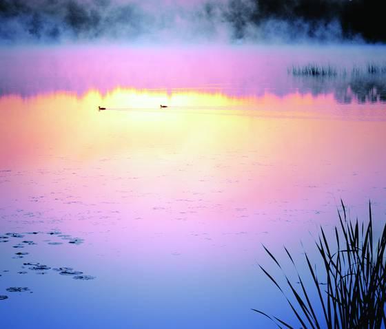 Loons at dawn