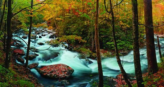 Autumn ascending