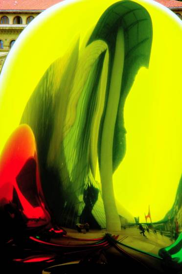 Giant tulips