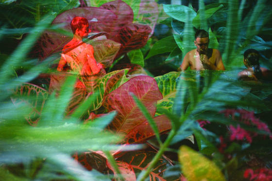 Jungle children
