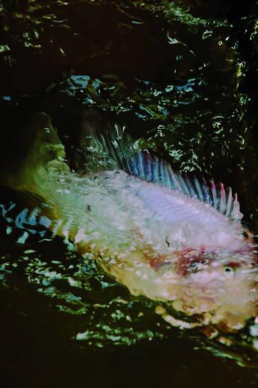 Organless swim