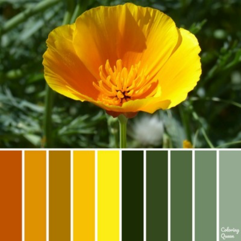 California Poppy color scheme