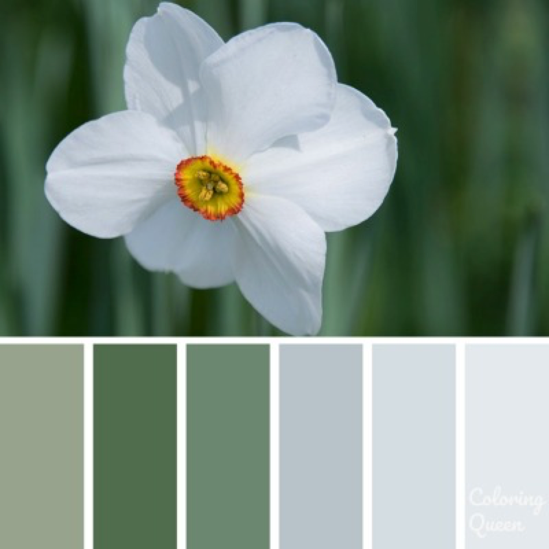 White Daffodil Color Scheme