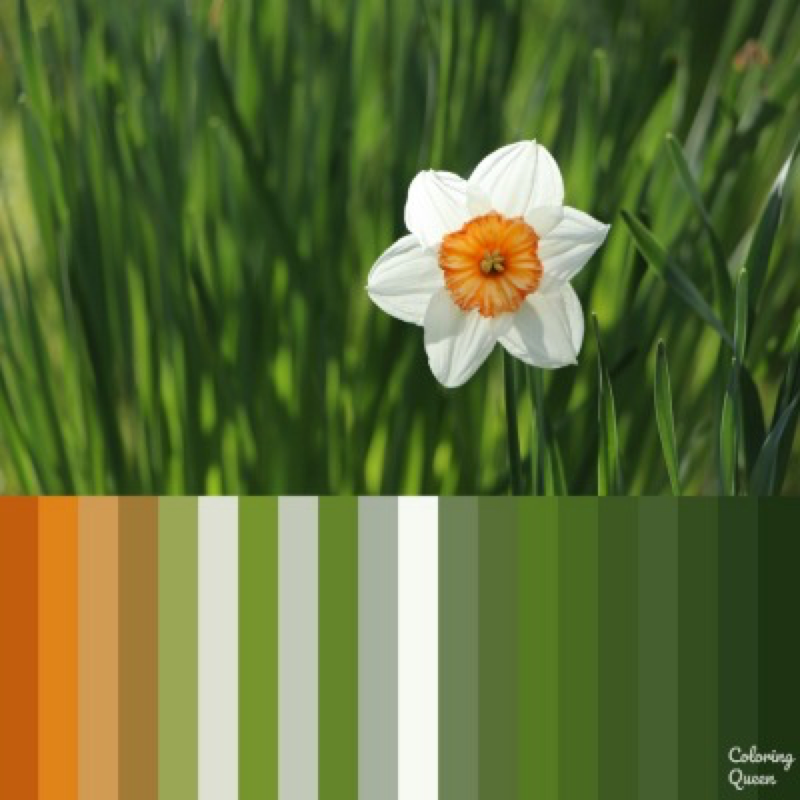 White Daffodil with large orange centre color palette