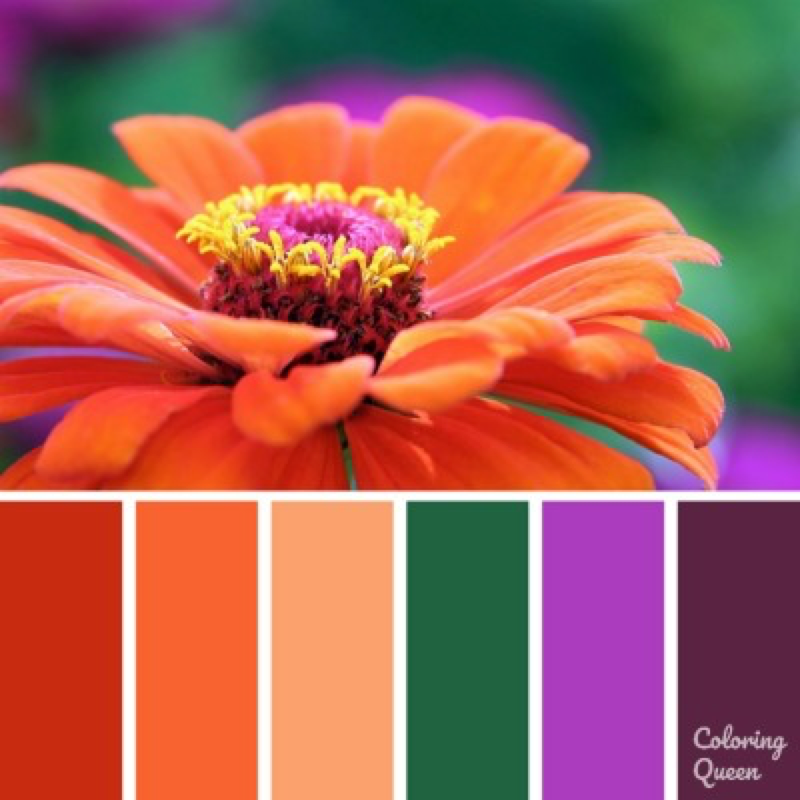 Red gerbera color scheme