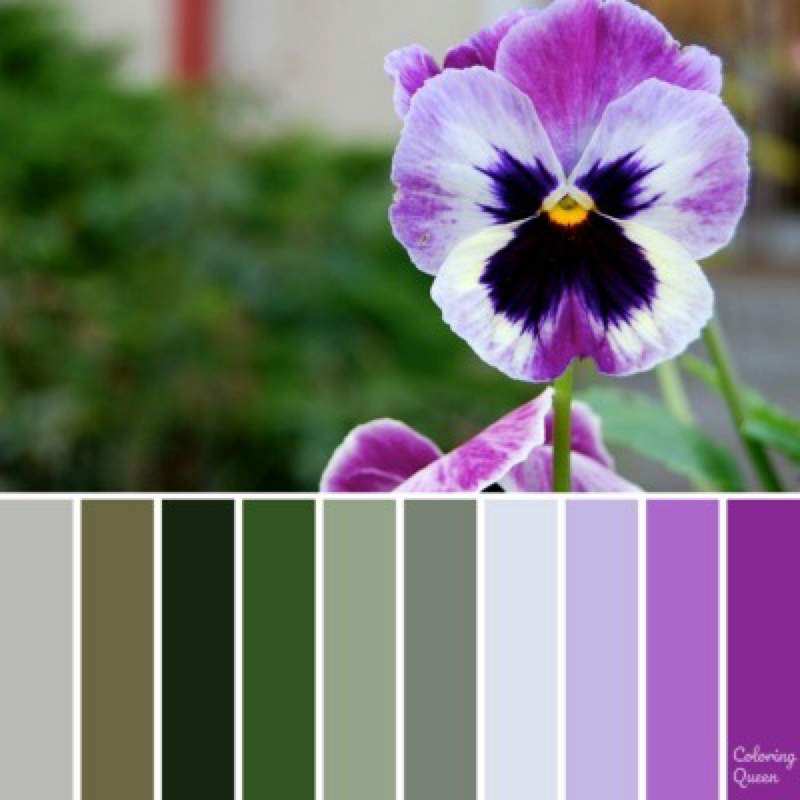 Purple pansy color palette