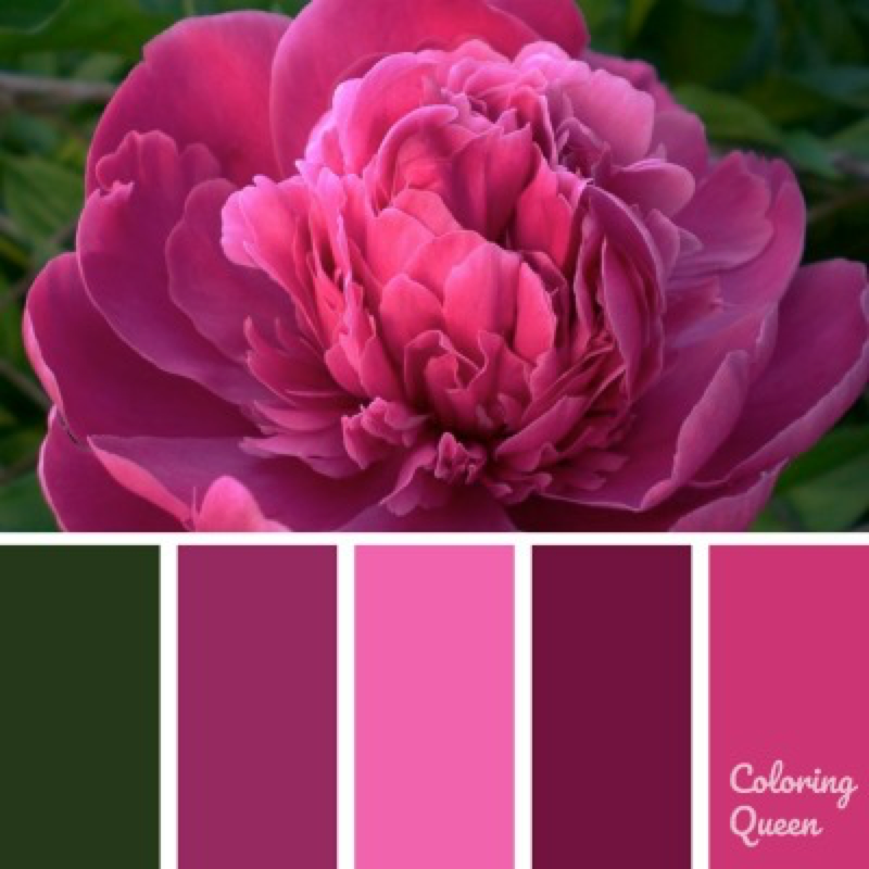 Bright pink peony color palette