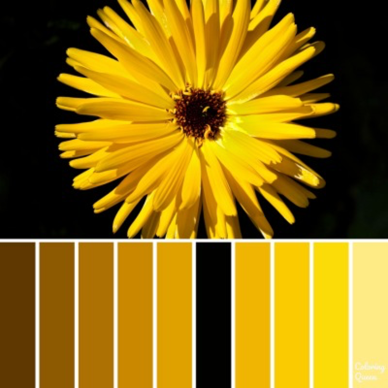 Gold daisy color scheme
