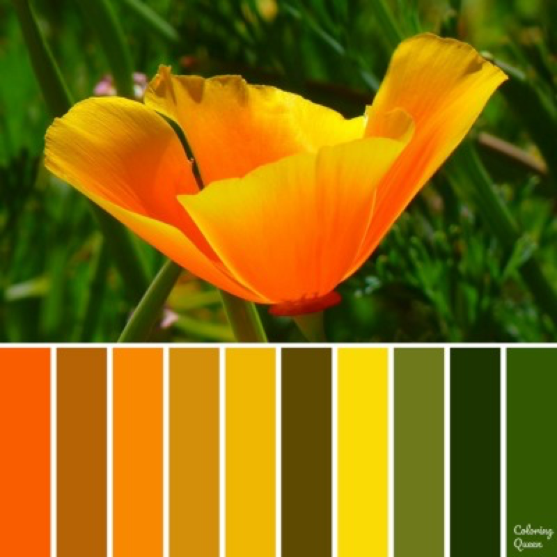 Icelandic Poppy color scheme