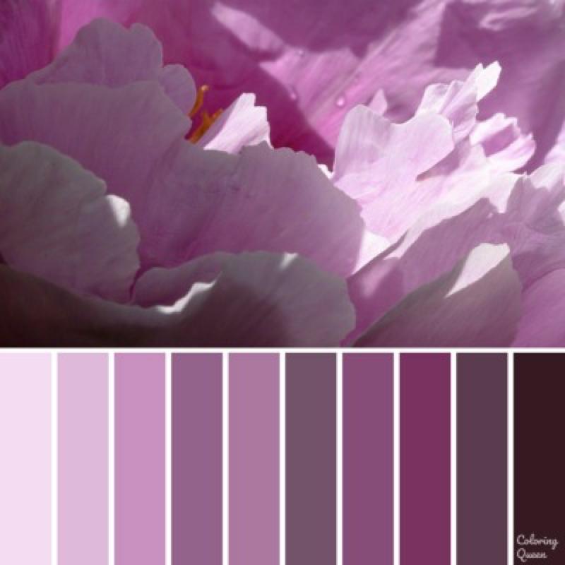 Mauve peony color scheme