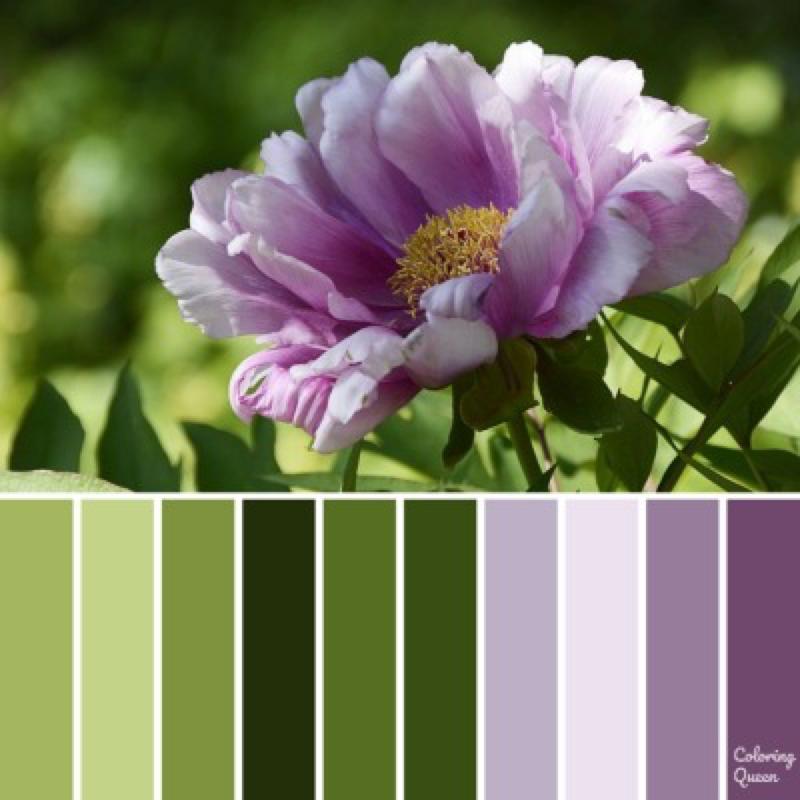 Purple peony coloring palette