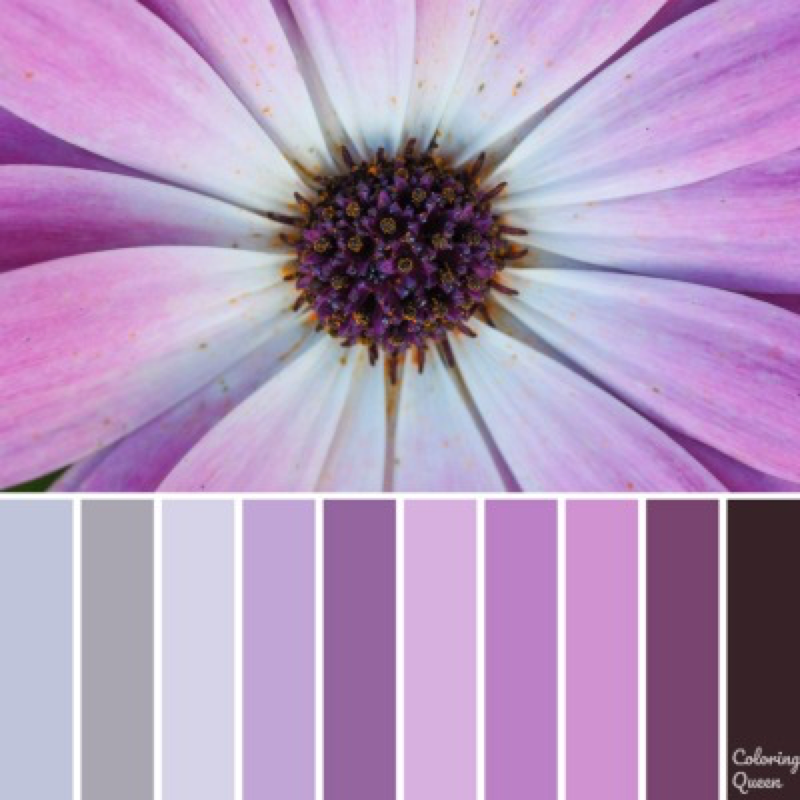 Close up of purple daisy color scheme