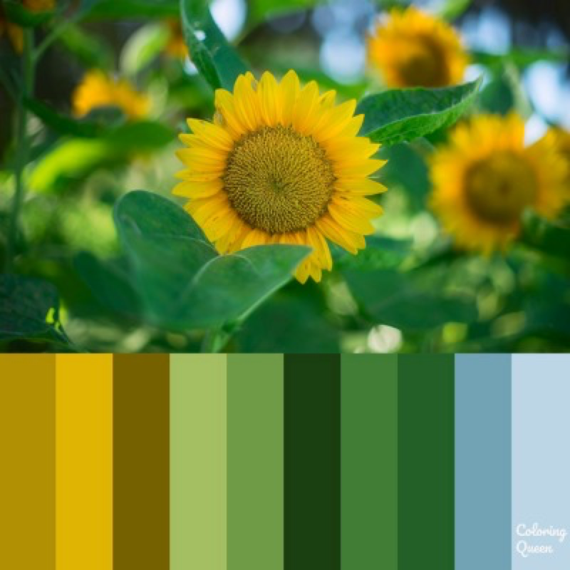 Small sunflowers color scheme