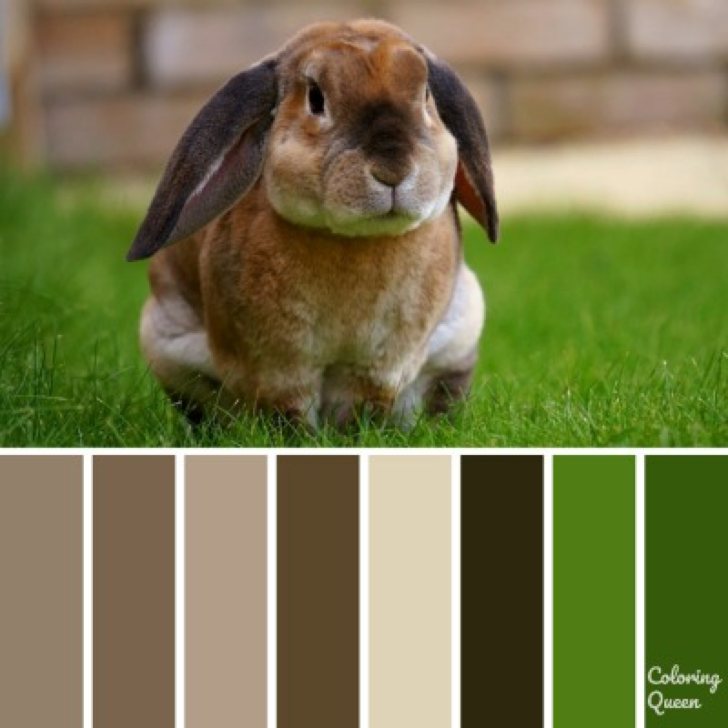 Brown bunny rabbit color scheme