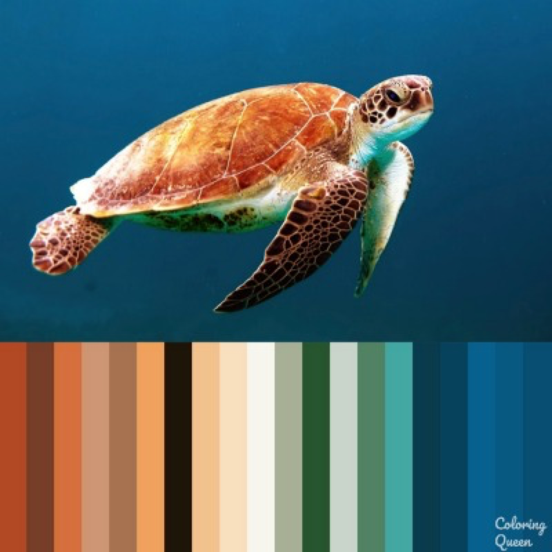 Sea turtle color scheme