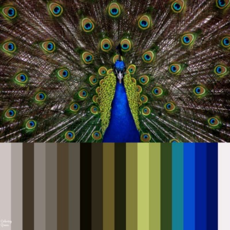 Peacock color palette