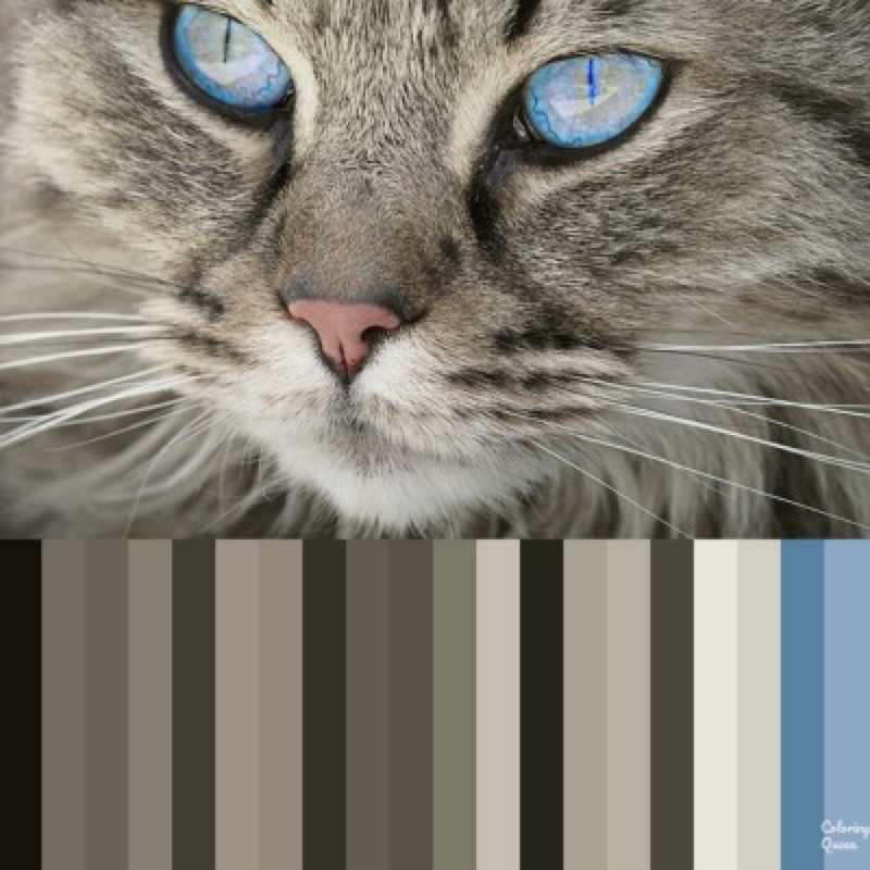 Brown/tabby cat with blue eyes color palette