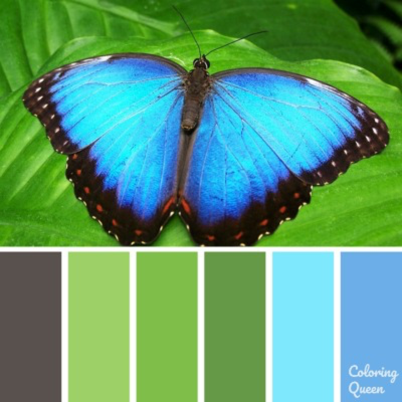 Blue butterfly color scheme