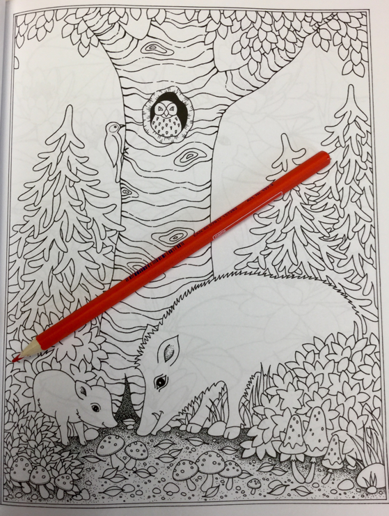 Woodland Animals Coloring Book Review Coloring Queen