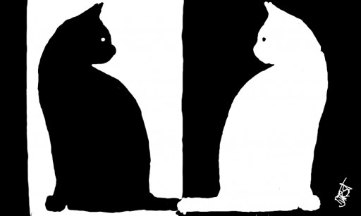 the cat in black and white by dürst