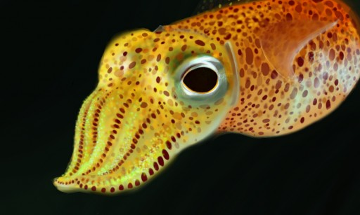 Colors! Live - Hawaiian Bobtail Squid by Marakala