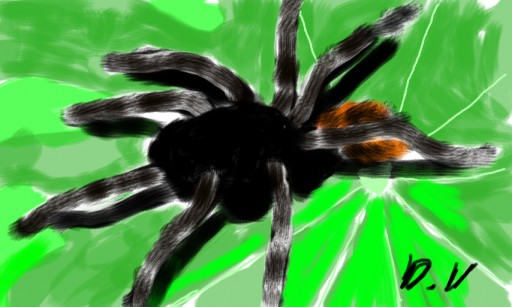 spinne by the volp