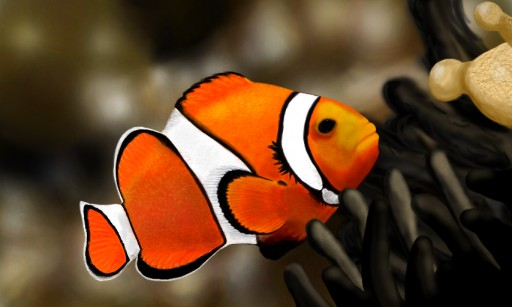 Clownfish by Lylo