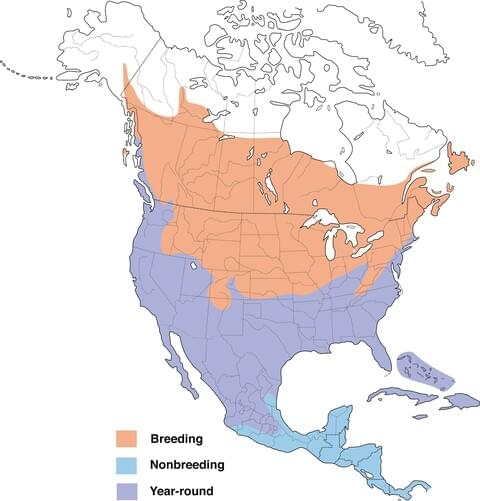 range map of the killdeer