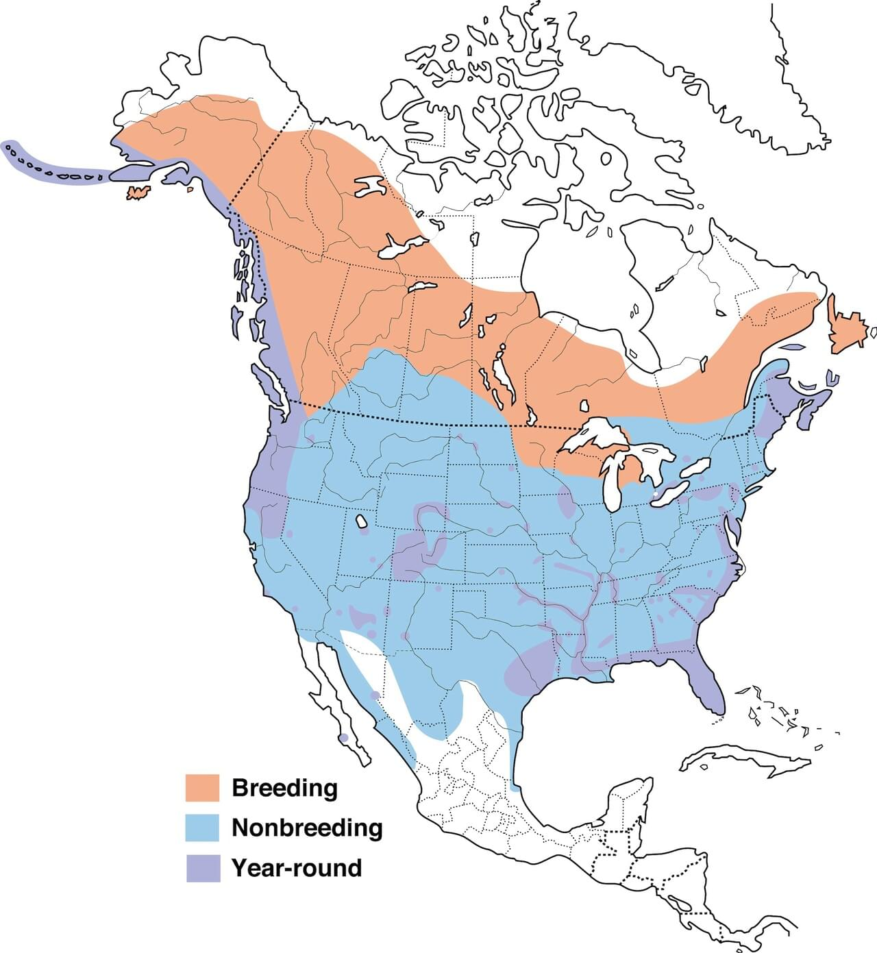Bald Eagle Range Map All About Birds Cornell Lab of Ornithology