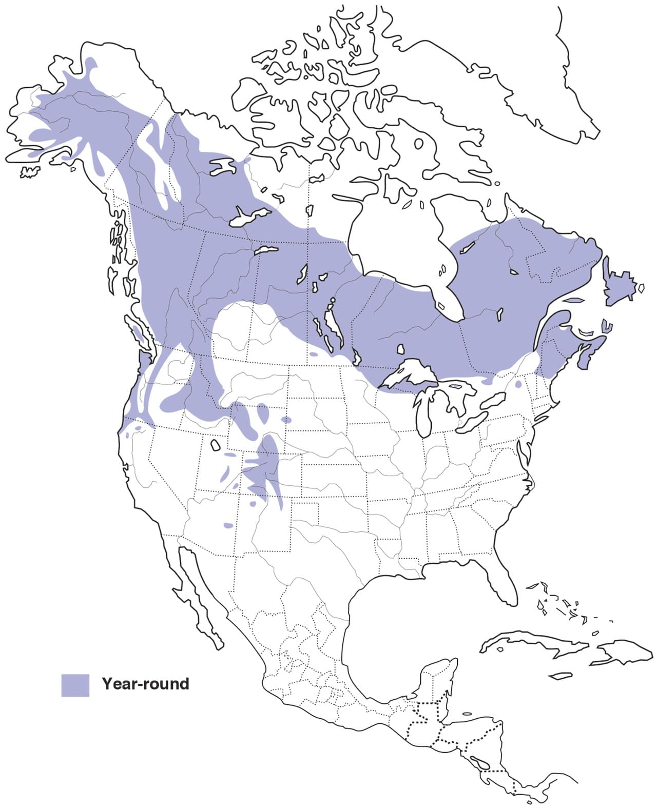 Gray jay overview all about birds cornell lab of ornithology image of range map for gray jay gumiabroncs Image collections
