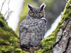 Online Bird Guide Bird Id Help Life History Bird Sounds