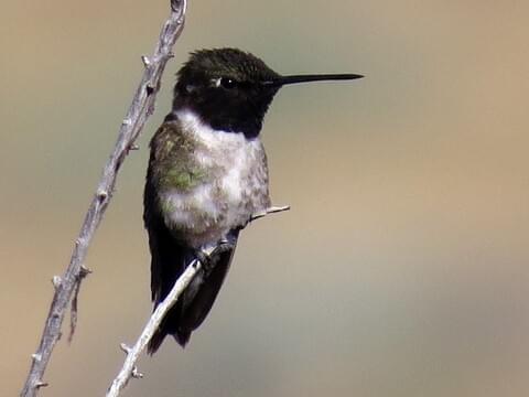 Christmas Mountain Oasis | Ornithologist's Blog