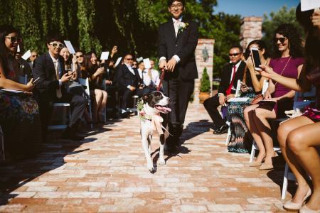 Dog Friendly Weddings