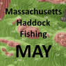 Massachusetts Haddock Fishing - May