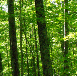 sustainable forest management at Huber Resources